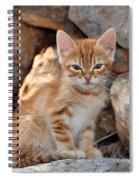 Kitten In Hydra Island Spiral Notebook
