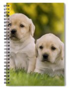 Labrador Puppies Spiral Notebook