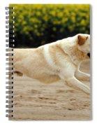 Labrador Retriever Dog Spiral Notebook