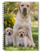 Labrador With Two Puppies Spiral Notebook