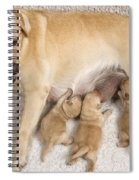 Labrador With Young Puppies Spiral Notebook