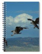 Landing Pattern Of The Osprey Spiral Notebook