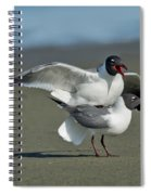 Laughing Gulls Spiral Notebook