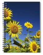 Laval, Quebec, Canada Sunflowers Spiral Notebook