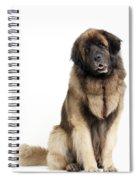 Leonberger Dog Spiral Notebook