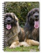 Leonberger Dogs Spiral Notebook