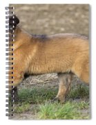 Leonberger Puppy Spiral Notebook