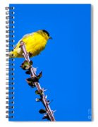 Lesser Goldfinch Spiral Notebook