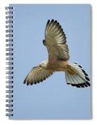 Lesser Kestrel Falco Naumanni Spiral Notebook