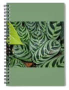 Light And Dark Green Leaves Spiral Notebook