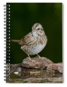 Lincoln Sparrow Spiral Notebook