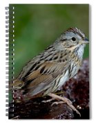 Lincolns Sparrow Spiral Notebook
