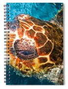 Loggerhead Sea Turtle Spiral Notebook