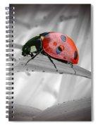Lone Ladybug Spiral Notebook