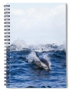 Long-beaked Common Dolphins Spiral Notebook