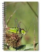 Long-horned Katydid Tettigonid Spiral Notebook