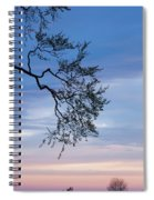 Low Angle View Of Tree At Dawn, Dark Spiral Notebook