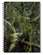 Loxahatchee Refuge-4 Spiral Notebook