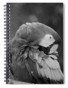 Macaws Of Color B W 17 Spiral Notebook