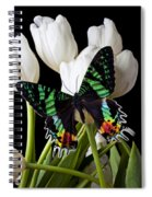 Madagascar Butterfly Spiral Notebook