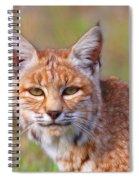 Magical Bobcat Spiral Notebook