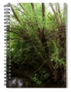 Magical Tree In Forest Spiral Notebook