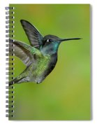 Magnificent Hummingbird Spiral Notebook