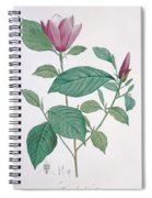 Magnolia Discolor, Engraved By Legrand Spiral Notebook