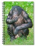 Male Bonobo Spiral Notebook