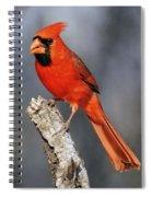 Male Cardinal Spiral Notebook