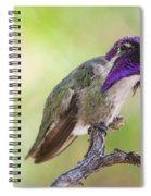 Male Costa Hummingbird Spiral Notebook