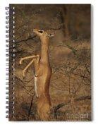 Male Gerenuk Spiral Notebook