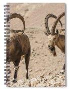 Male Nubian Ibex Spiral Notebook