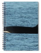 Male Orca Killer Whale In Monterey Bay California 2013 Spiral Notebook
