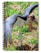 Marabou Stork Spiral Notebook