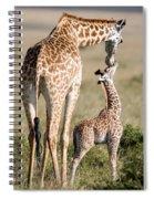 Masai Giraffe Giraffa Camelopardalis Spiral Notebook