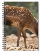 Mesopotamian Fallow Deer 2 Spiral Notebook