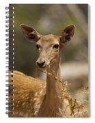 Mesopotamian Fallow Deer 3 Spiral Notebook
