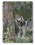 Mexican Grey Wolf 1 Spiral Notebook