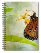 Queen Butterfly Danaus Gilippus Spiral Notebook