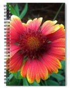 Morning Beauty Spiral Notebook