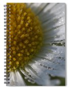 Mornings Dew Spiral Notebook