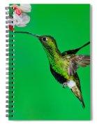 Mountain Velvetbreast Spiral Notebook