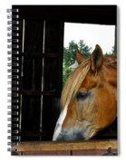 Mr Ed Spiral Notebook