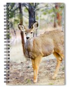 Mule Deer Does Spiral Notebook