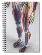 Muscles Of The Lower Body Spiral Notebook