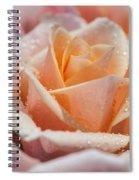 My Birthday Rose 1 Spiral Notebook