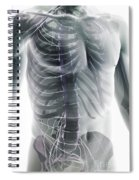 Nerves Of The Trunk Spiral Notebook