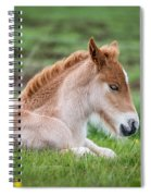 New Born Foal, Iceland Purebred Spiral Notebook
