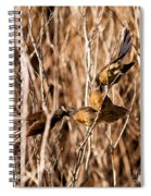 New Zealand Fantail Chicks Being Fed By Parents Spiral Notebook